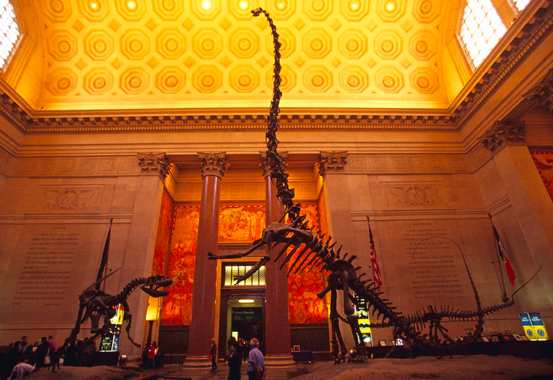 Американский Музей Естествознания