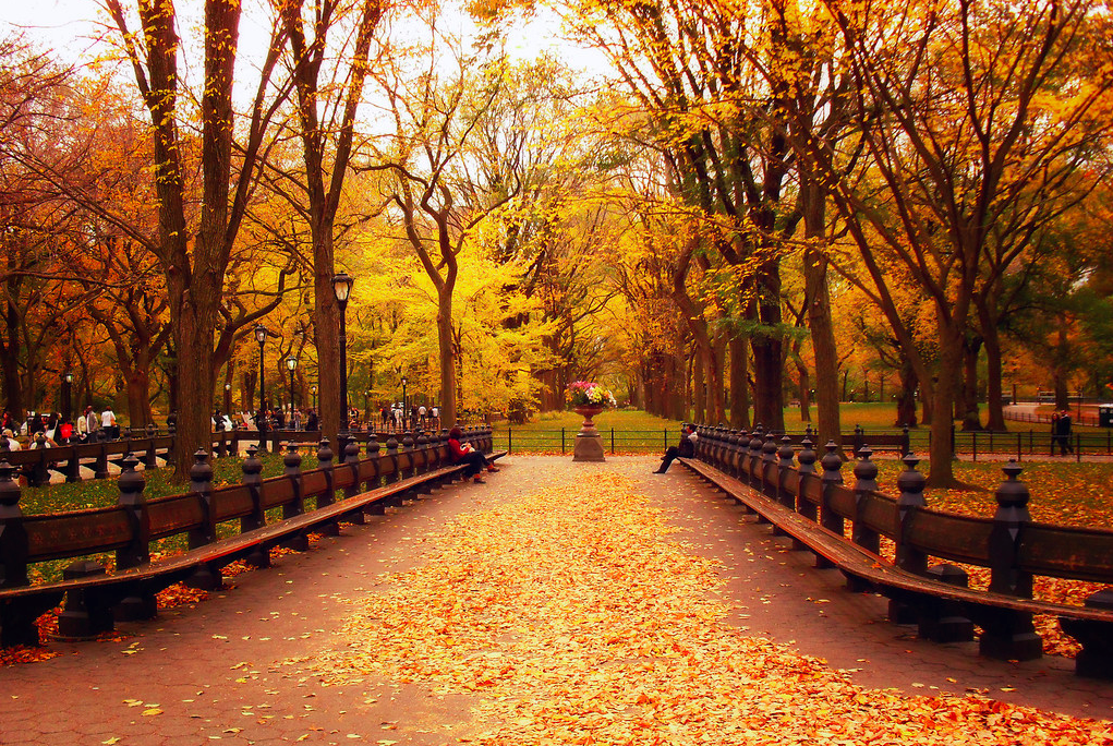 Центральный Парк 2
