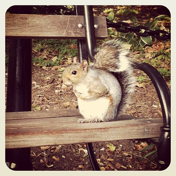 Squirrel at Washington Square Park